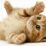 kedi beslemek kedi eğitimi
